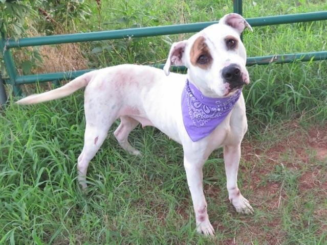Lucy is among the many animals awaiting adoption at the Oklahoma City Animal Shelter. [PHOTO PROVIDED]