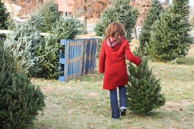 Many like to visit a local Christmas tree farm and select and cut their own fresh tree. [Metro Creative Connection]