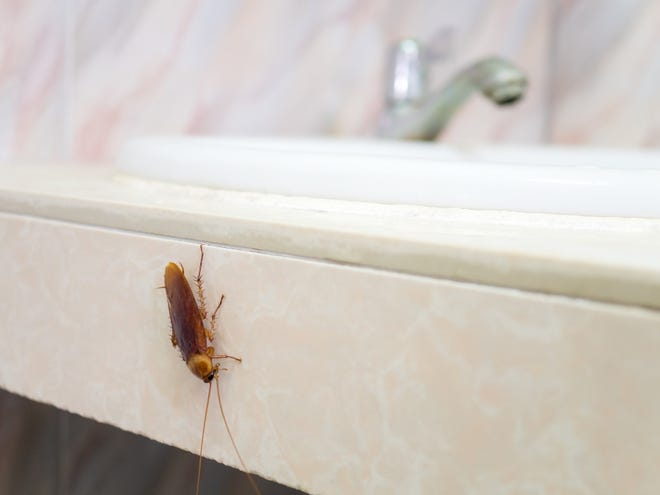For safer living spaces, prioritize home improvement projects that fight insect invasions. [STATEPOINT PHOTO]
