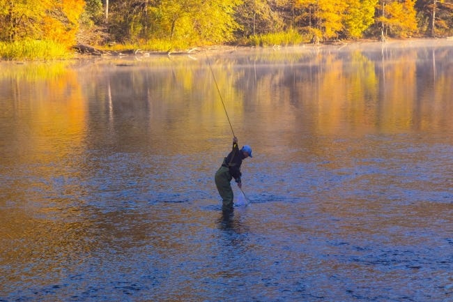 A fly fisherman nets a trout on the Lower Mountain Fork River, which runs through Beavers Bend State Park in southeastern Oklahoma. [PHOTO BY DONNY CARTER]