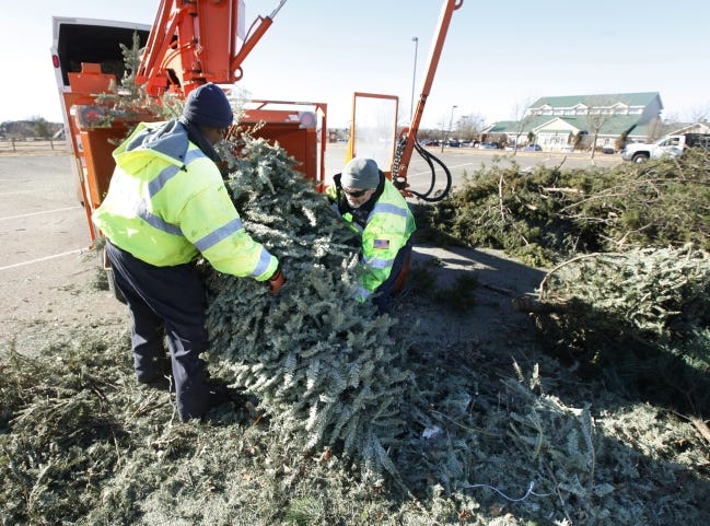 Christmas trees collected at locations in Mitch Park and Hafer Park will be chipped and turned into mulch. [THE OKLAHOMAN ARCHIVES]