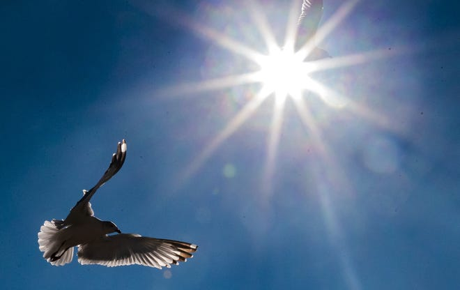 A gull flies around Lake Hefner on Tuesday. [Chris Landsberger/The Oklahoman]