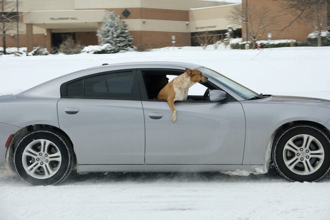 A dog hangs out the window of a car driving through the snow in Edmond on Wednesday. Oklahoma will finally get a break from the frigid weather and snow later this week. Highs are expected to reach the upper 30s and 40s over the weekend. [Doug Hoke/The Oklahoman]