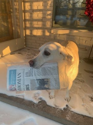 Long-time subscriber John Waldo submitted this photo of his dog Sally completing a delivery on Tuesday. [Photo Provided]