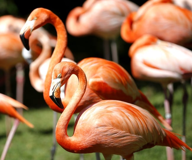 The Oklahoma City Zoo and Botanical Garden has changed its visiting hours and will now be open from 9 a.m. to 5 p.m. daily. [SARAH PHIPPS/THE OKLAHOMAN ARCHIVES]