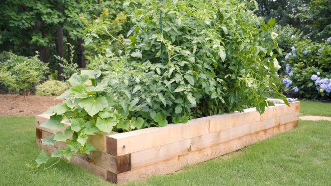 For an amazing crop this season, take a cue from the professionals and build a raised garden bed for best results. [STATEPOINT PHOTO]