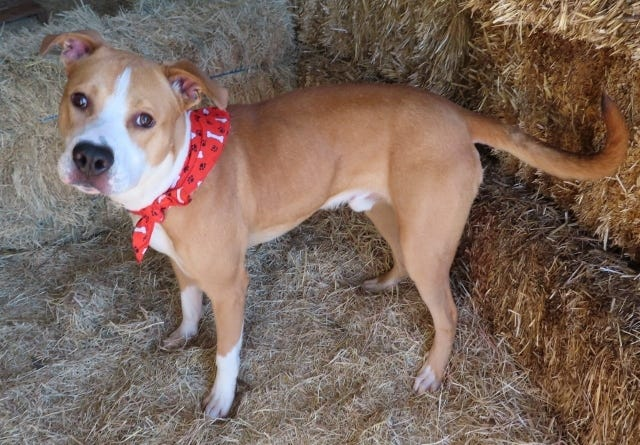 Larry is one of the long-term dogs available for adoption through Oklahoma City Animal Welfare. [PHOTO PROVIDED]