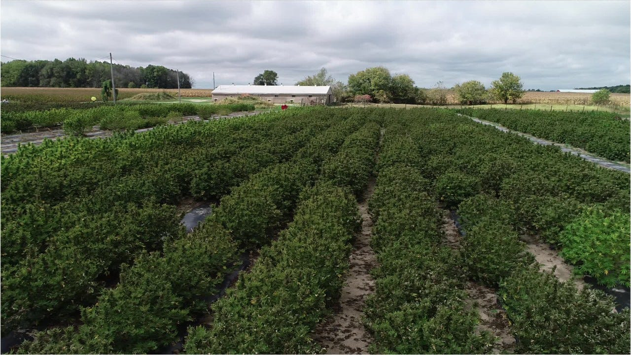 Indiana offers perfect hemp habitat