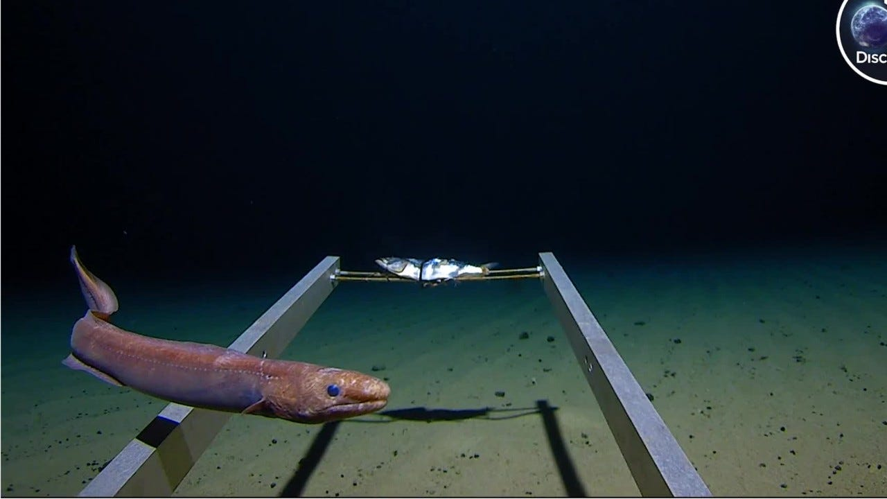 Five Deeps explores the 7-mile-deep Mariana Trench