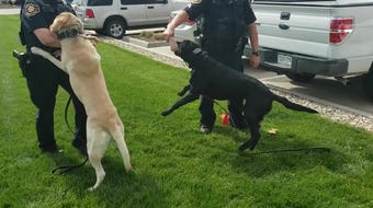 A new Colorado Supreme Court ruling is limiting the abilities of marijuana-sniffing K-9s, forcing law enforcement to phase them out.