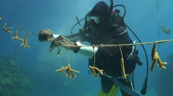 """A dedicated band of Jamaicans are rescuing coral reefs, showing nature can heal. Introducing """"What Can Be Saved?,"""" a new weekly AP series spotlighting heroic efforts to restore a world threatened by climate change. (Sept. 17)"""