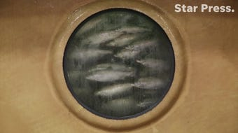 AquaBounty Fish Farm invited media to view its newly hatched, genetically engineered salmon at its facility just outside of Albany. The company has been fighting for the legal right to farm genetically engineered fish since 1995.