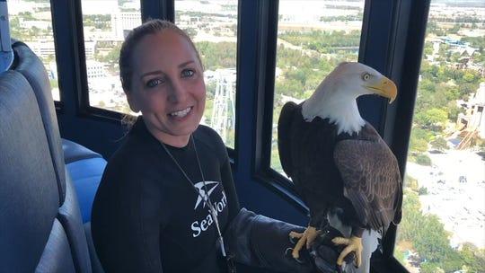 Bald eagle attacks $950 state drone, drops it into Lake Michigan