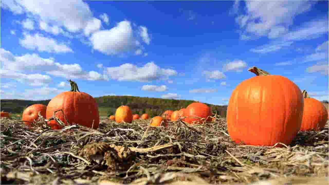 Salem Dining Month returns for October, here's where you'll find restaurant deals