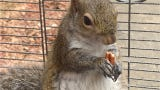 An Alabama man accused of drug possession allegedly fed methamphetamine to a caged squirrel in order to keep it aggressive, police said.