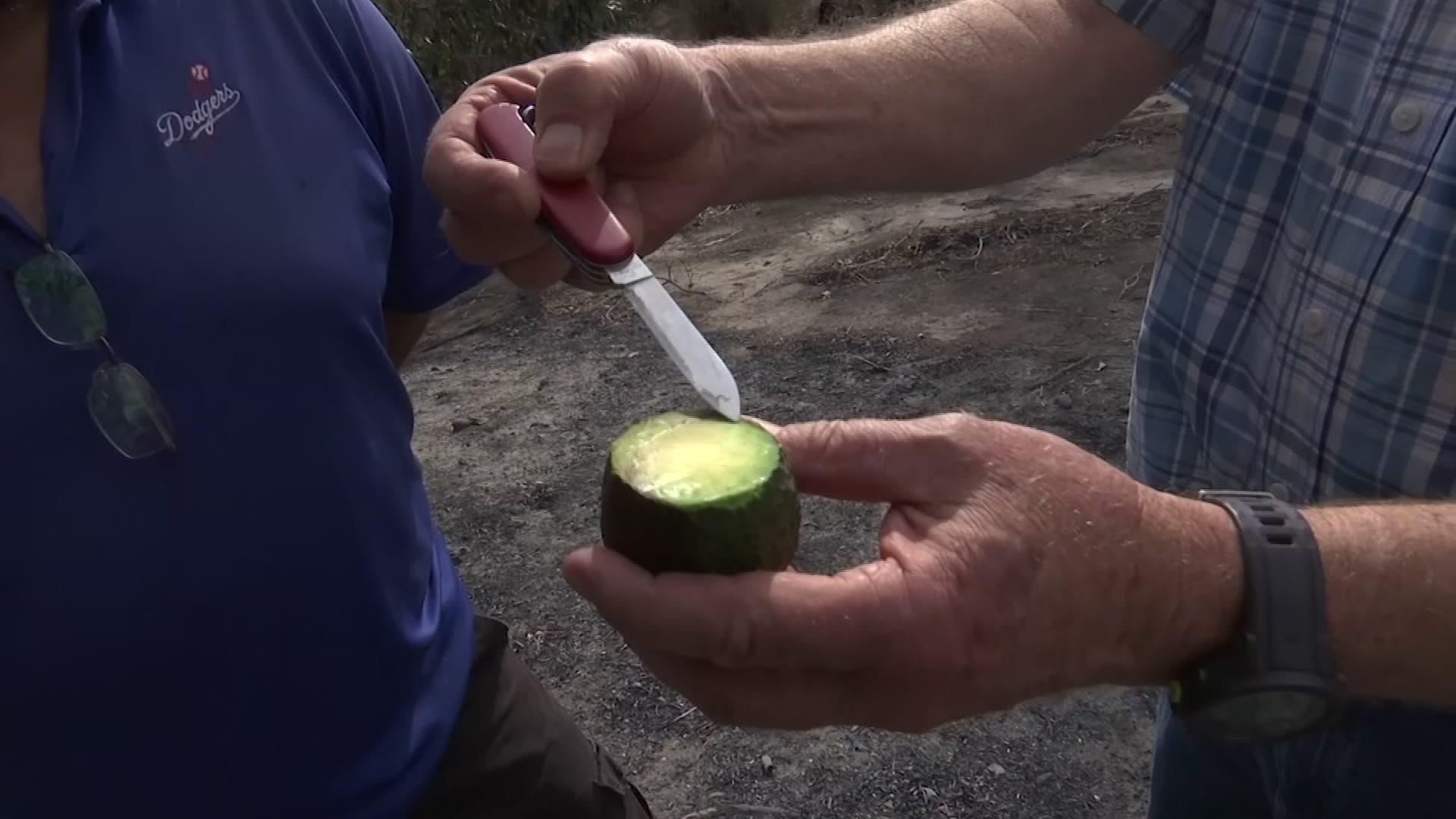 California wildfires torch avocado crops
