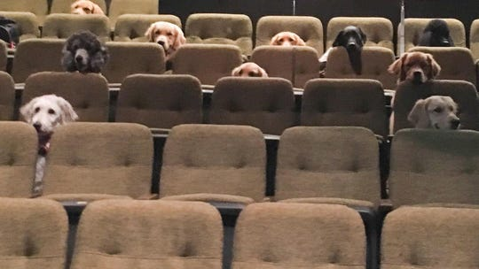 Adorable photo of dogs watching 'Billy Elliot: The Musical' at the theater goes viral