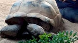 Forget the massage oil... you may need some turtle wax though. Buzz60's Tony Spitz has the details.