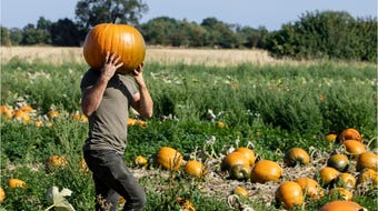 Where to find your own Great Pumpkin