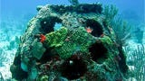 You can put your loved one's ashes into an artificial reef ball to create houses for sea creatures.
