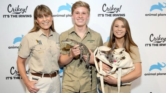 To celebrate their upcoming wedding, Bindi Irwin and fiance release a koala into the wild