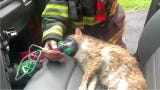 These days, firefighters try to care for all of the inhabitants of a home damaged by fire. Watch how Indianapolis firefighters cared for a cat overcome by smoke inhalation.