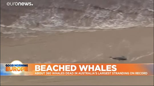 70 whales rescued from Australia's worst mass beaching; hundreds dead
