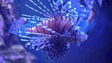 Experts are now turning to lionfish-hunting robots to help curb the destruction the invasive species has wrought on Atlantic ecosystems.