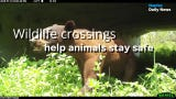 South Florida animals use wildlife crossings