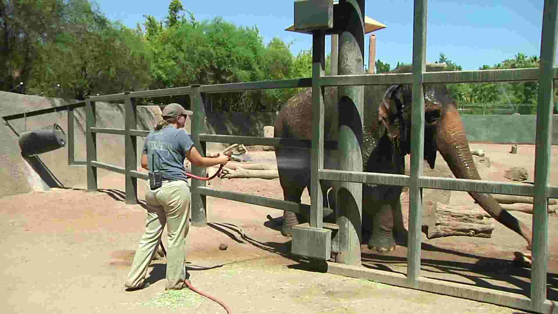 Phoenix Zoo beats the heat with water and ice