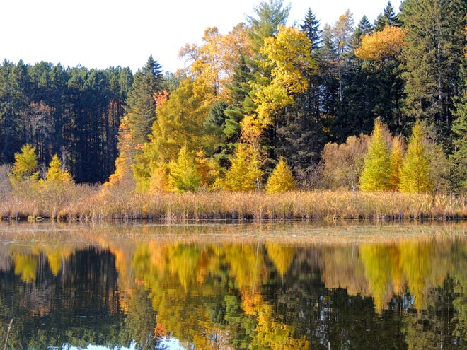 Quiet waters reflect the glow of tamaracks along the shore at Hartman Creek State Park, near Waupaca. Knowing when to expect certain natural events, such as the change in color of these stunning trees, or the migration patterns of birds, is helpful in getting great photos.