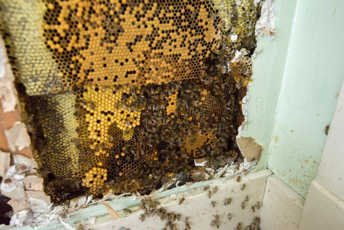 Beekeeping company to expand in Grayson