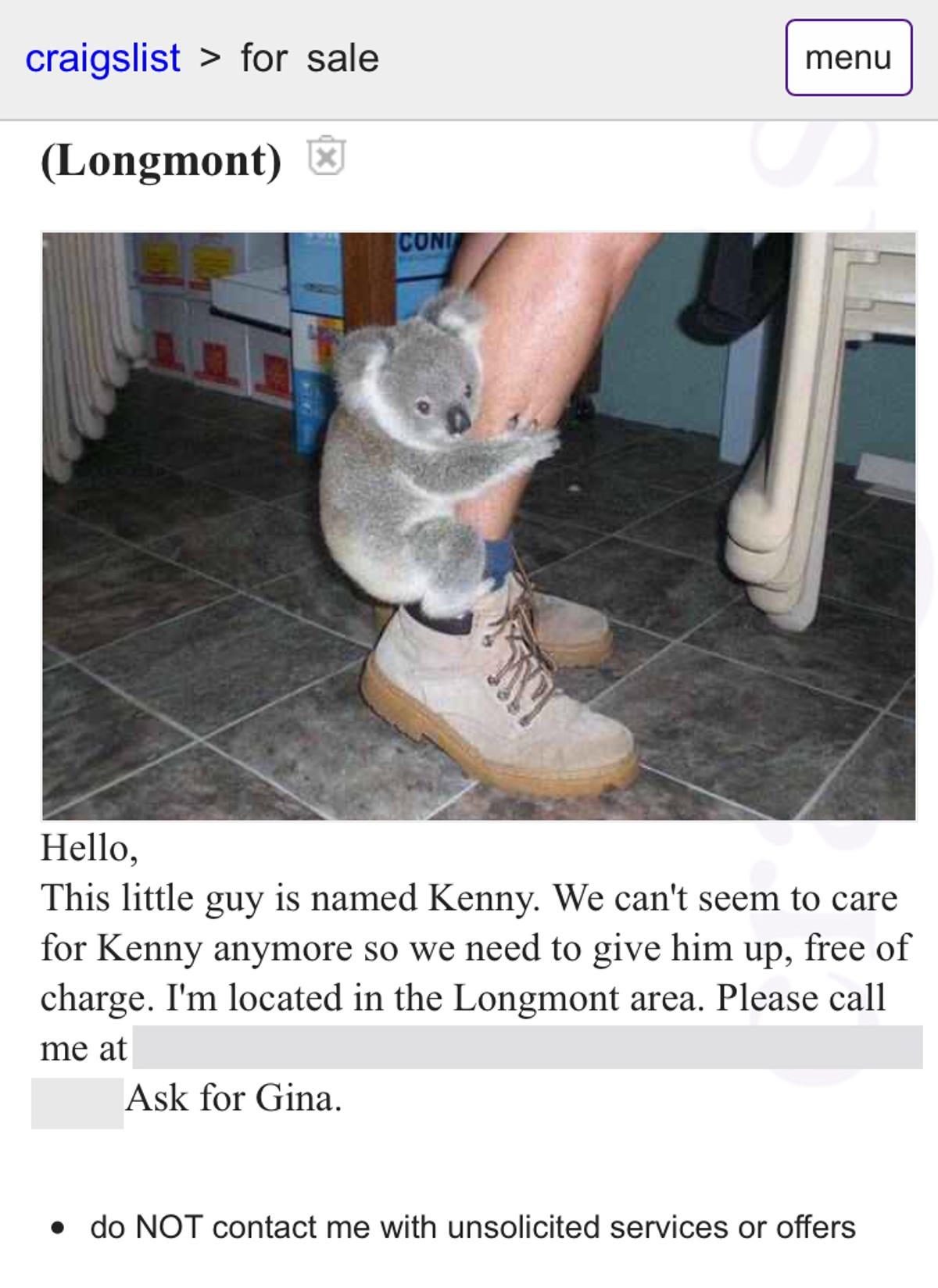 Craigslist prank goes wrong: Woman does not have koala