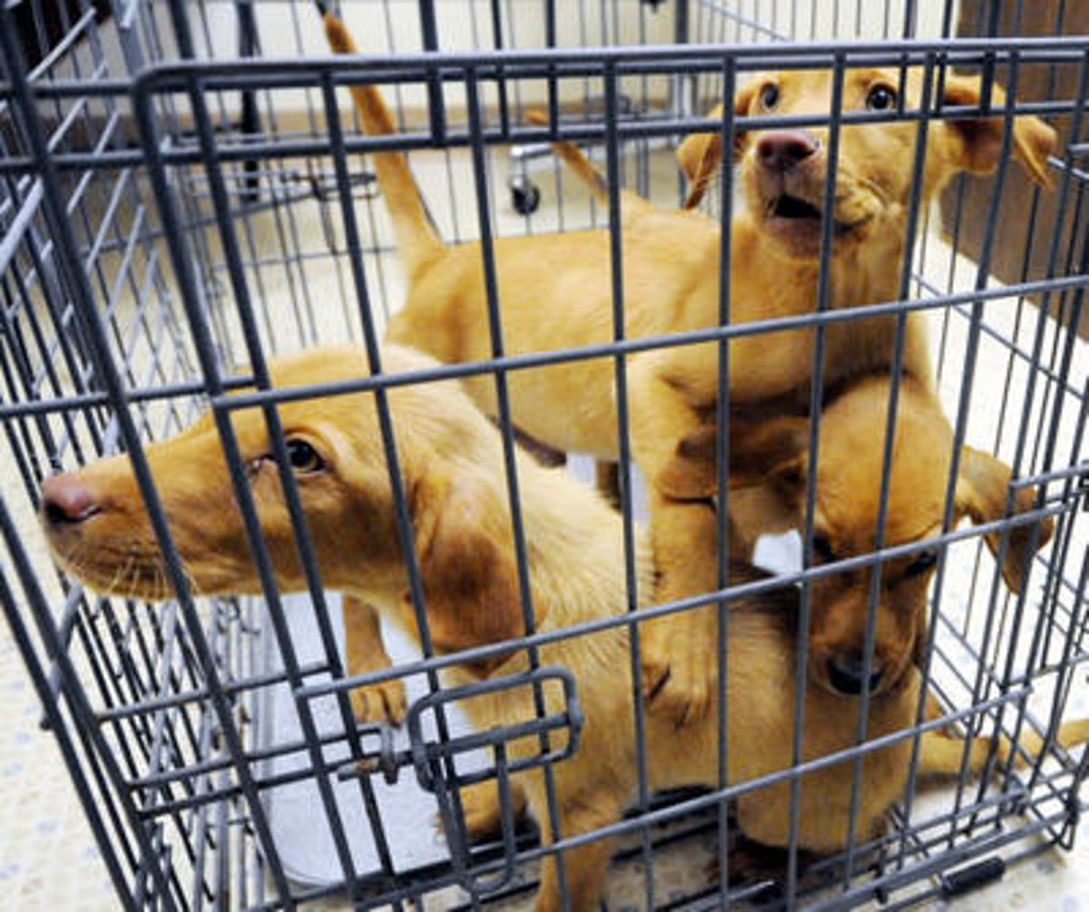 267 animal cruelty charges filed against East Brunswick pet