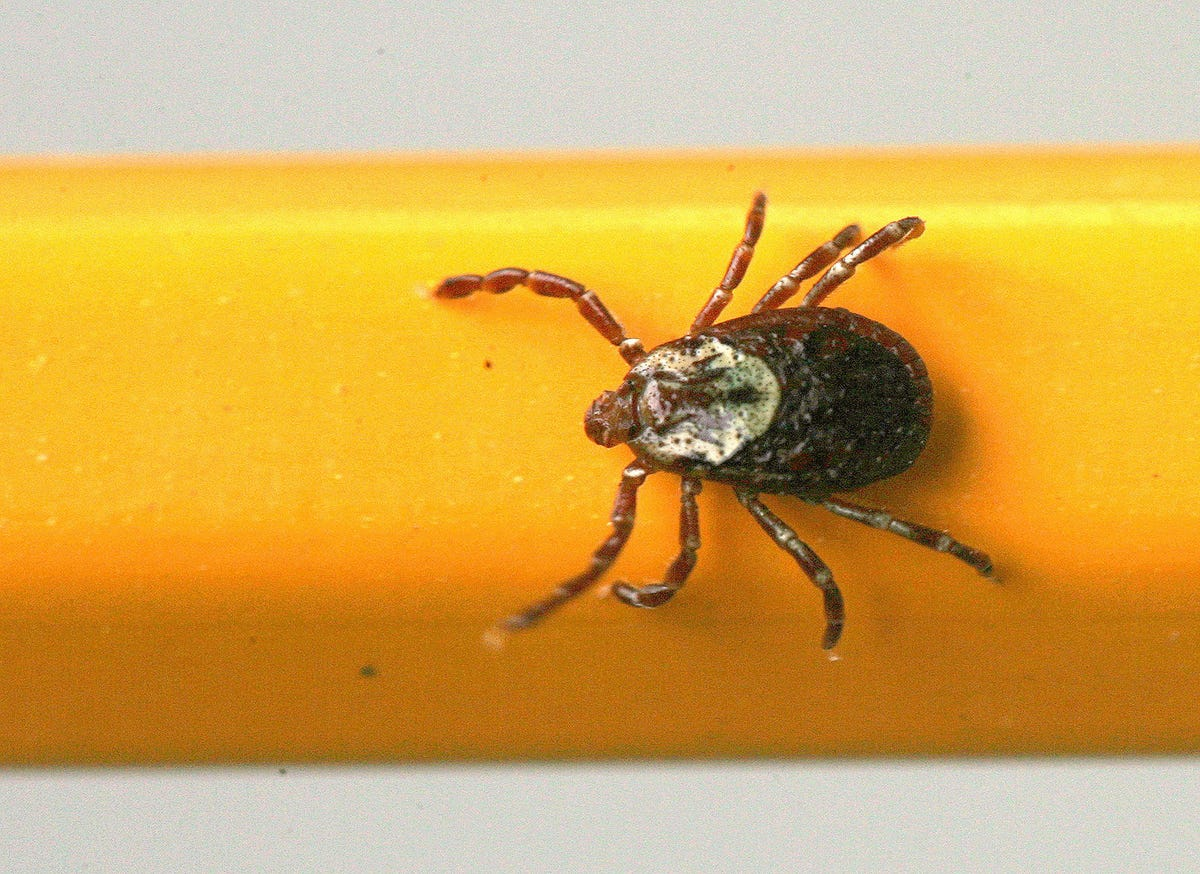 Lone Star tick might be latest invader in Michigan