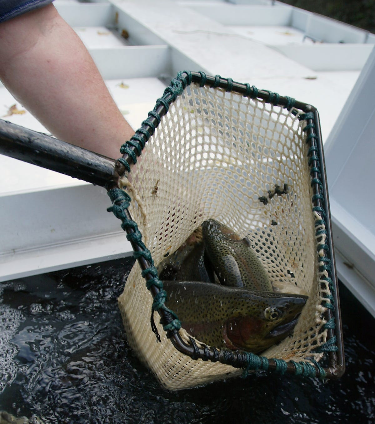 Trout season opens with more stocking this week