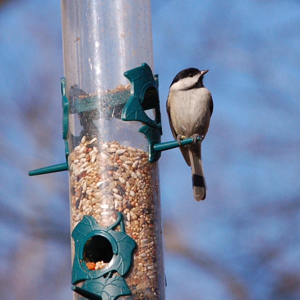 Whitmer vetoes bill to ease restrictions on feeding birds