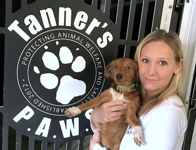 Tanner's P.A.W.S. founder Christie Speciale holds one of six rescued Dachshund mix dogs that need to be treated for heartworm.