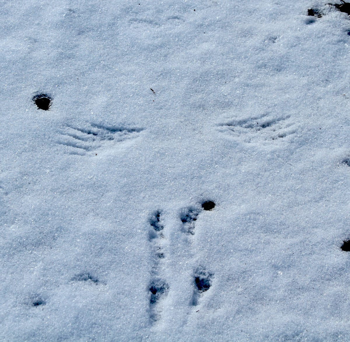 9aa1f74b Take the kids and find out who's leaving tracks in the snow