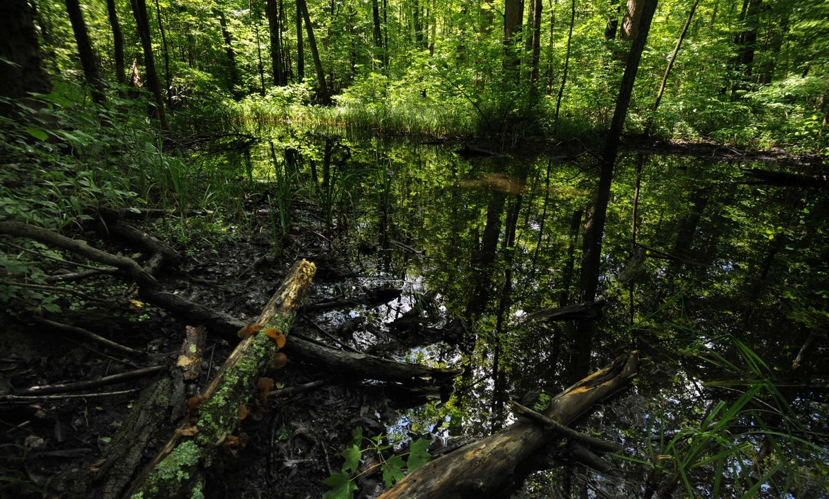 Ohio once had a huge swamp? Bestselling author explores it