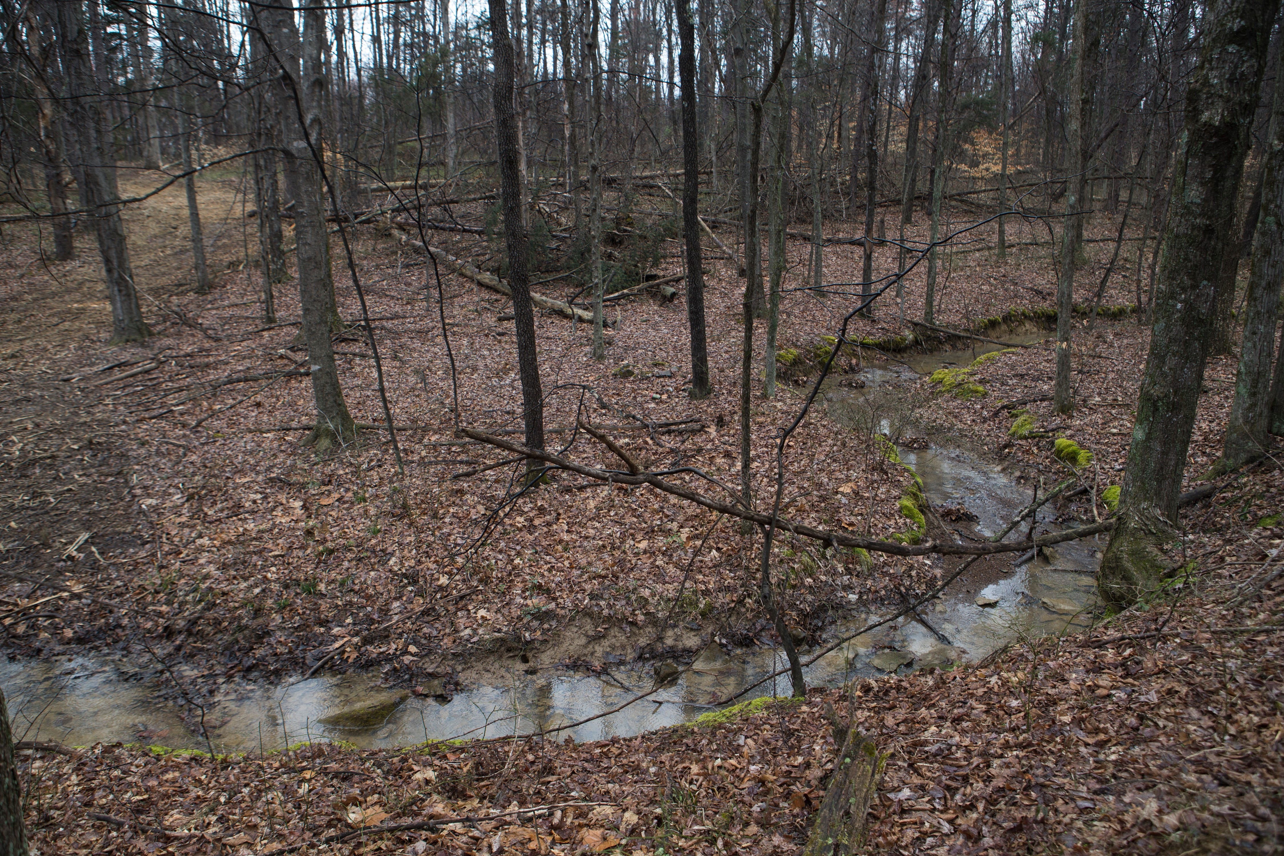 Bernheim Forest makes major land acquisition to protect bats