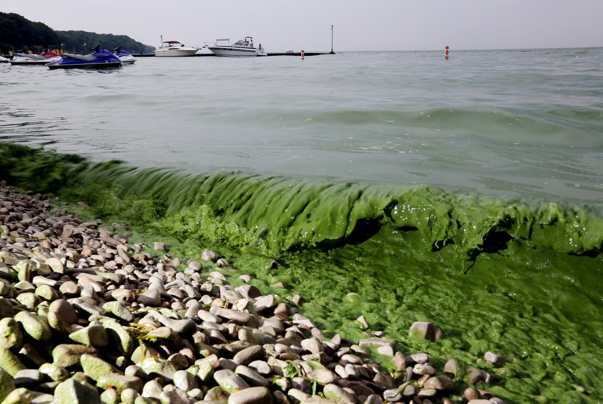 Western end of Lake Erie declared 'impaired': What it means   Detroit Free Press