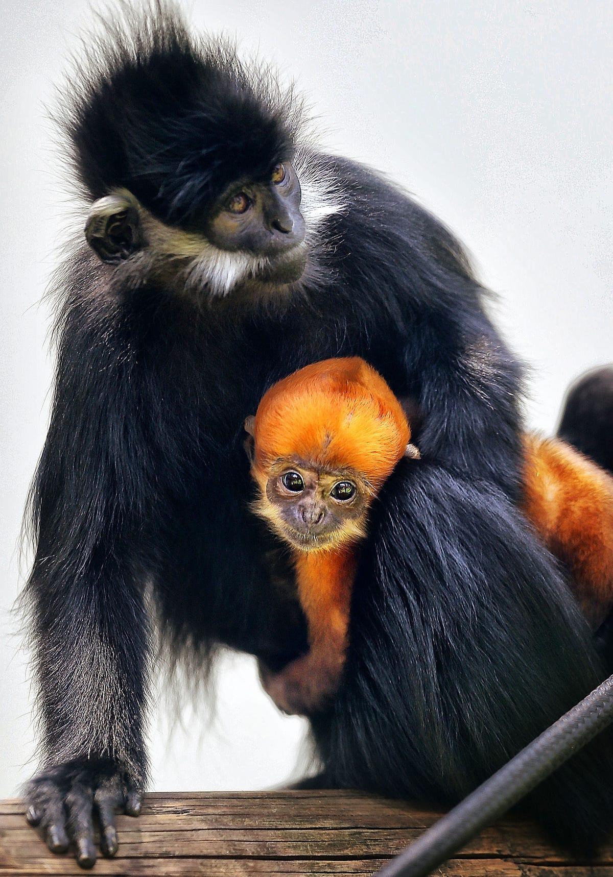 Record-breaking' birth at Memphis Zoo