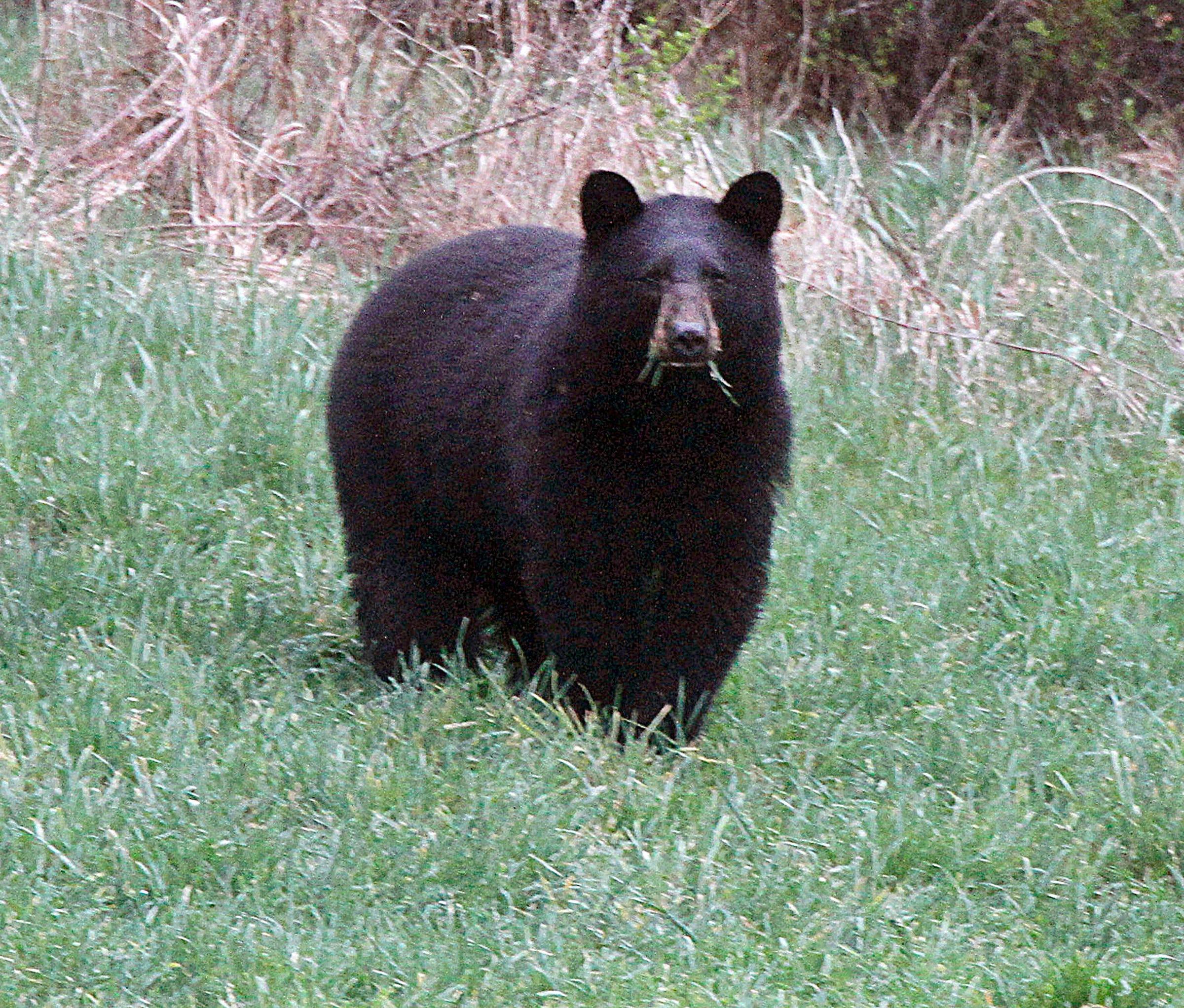 Марихуана черные медведи марихуана пацан фото