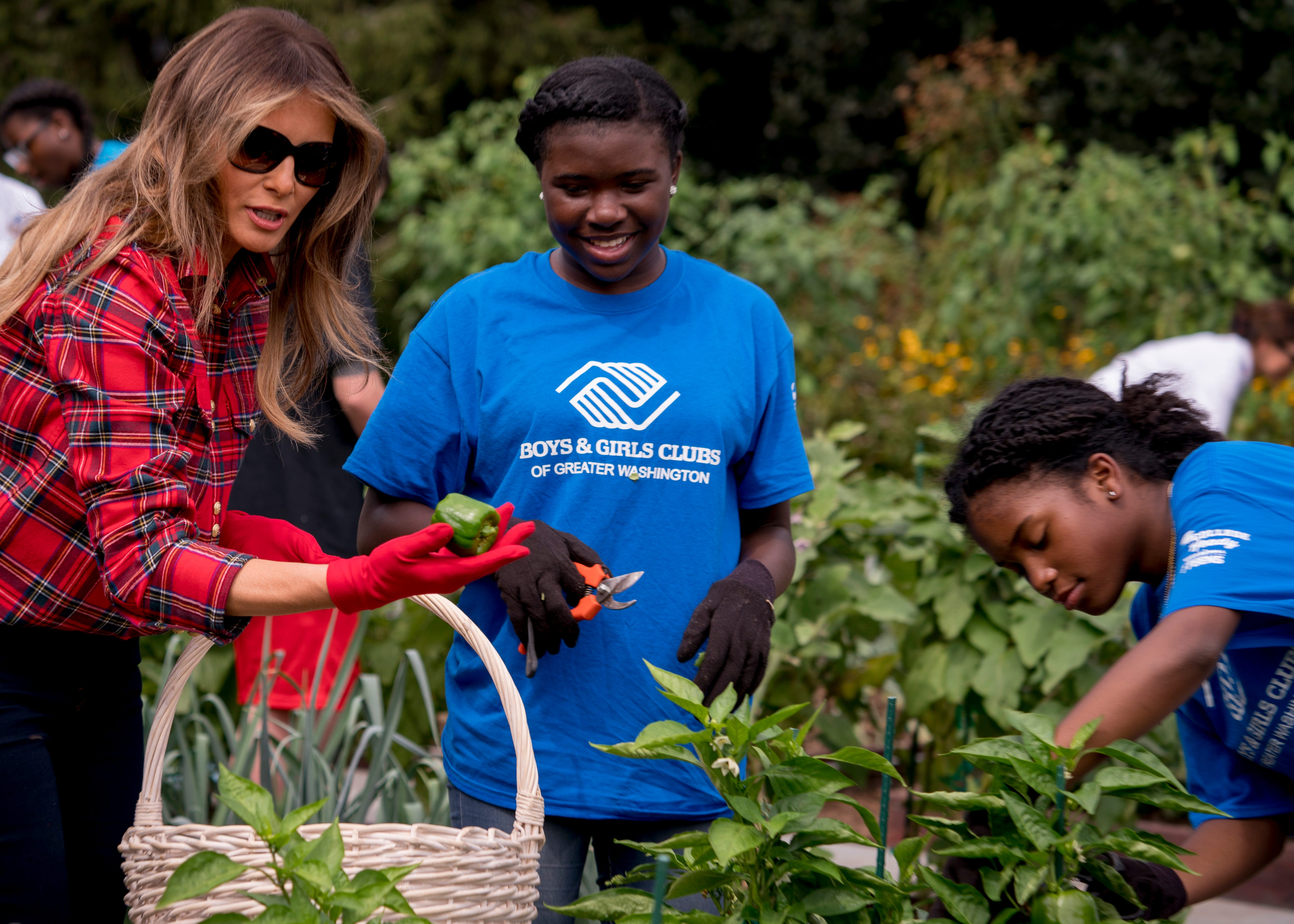 White House garden chic: Melania sports flannel, jeans, sneakers tending to crops