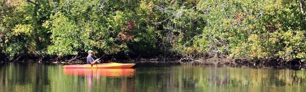 The Pocomoke River at Shad Landing.