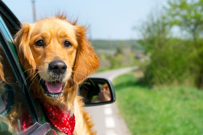 A dog can be great company on a road trip, but only if humans do their part.