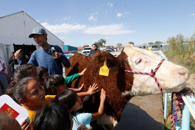 Nenahnezad Community School second-graders pet Jebediah, a cow owned by Dally Carlisle with the Double Spur 4-H Club from Crownpoint, on Thursday at the Northern Navajo Nation Fair in Shiprock.