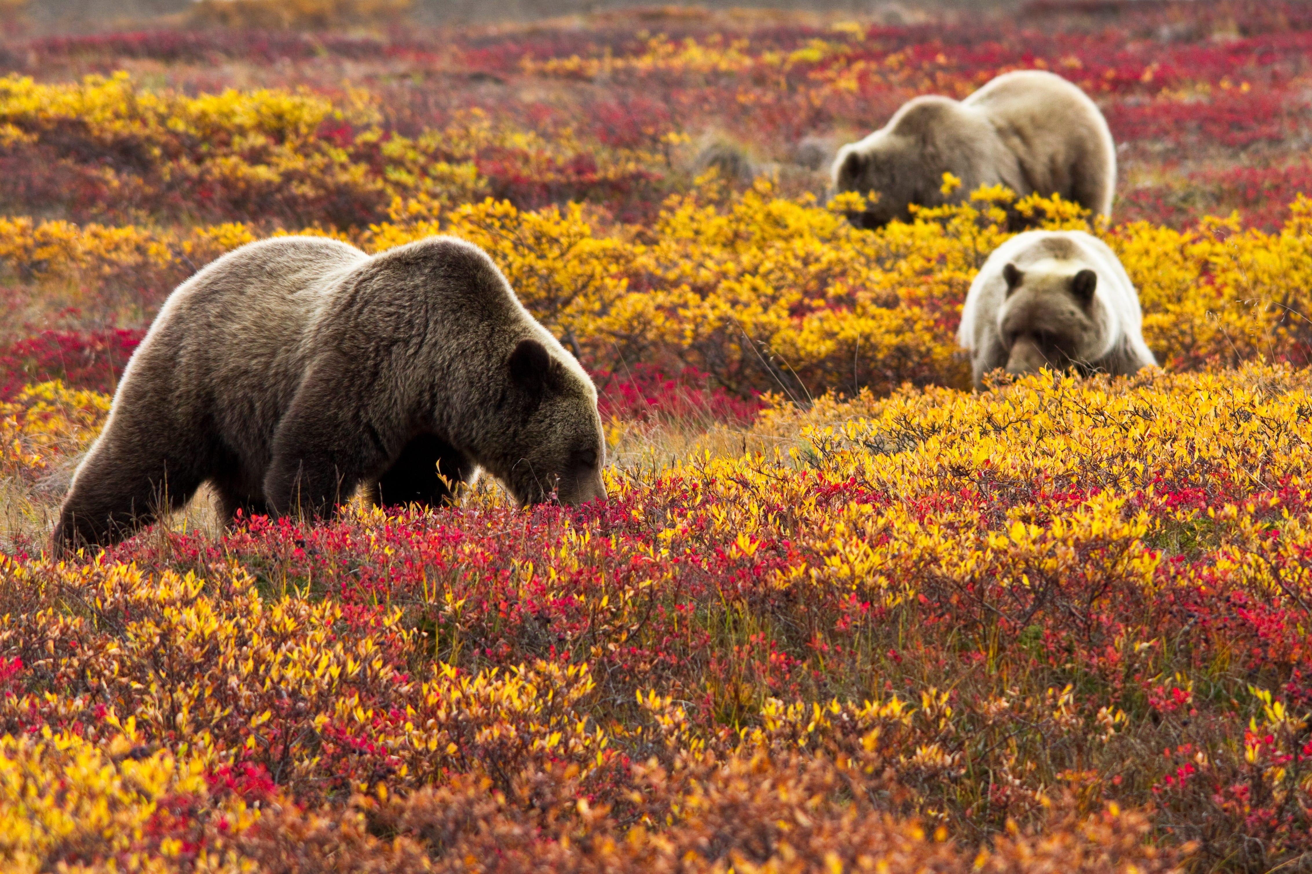 Denali National Park: Wild, scenic beauty
