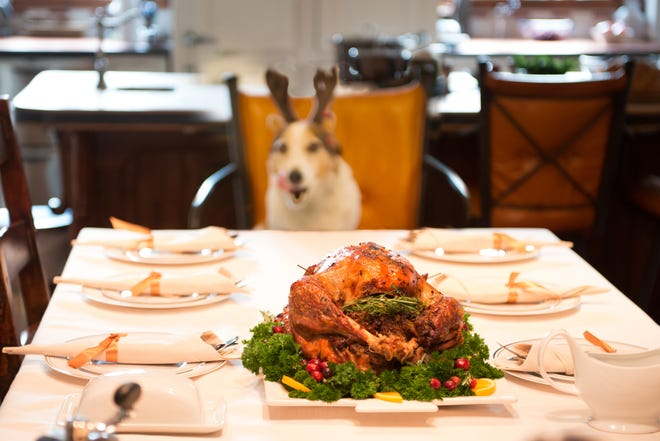 Dogs should not be allowed unfettered access to the Thanksgiving dinner.